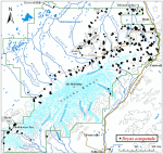 Occurrence map for White mountain-avens