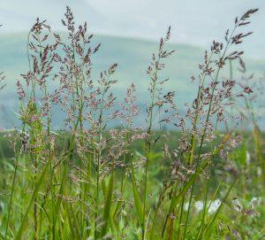 intricate grass flowers