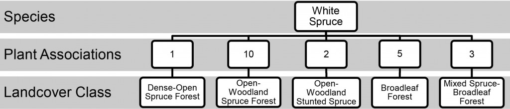 Plant Comm. Chart: White Spruce, Landcover Class, Associations