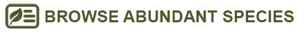 browse abundant species button