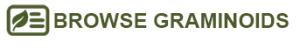 browse graminoid button
