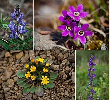 species collage