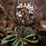 a rare plant