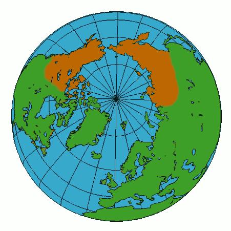 Amphiberingian biogeography