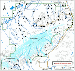 Occurrence map for sidebells wintergreen