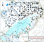 Occurrence map for bog blueberry