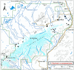 Occurrence map for Scamman's springbeauty