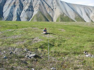 denali landscape with plot transects