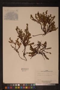 UAA herbarium specimen