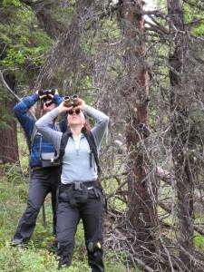 rock creek fieldwork- 2 people counting cones with binoculars
