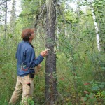 man looking for lichens on tree